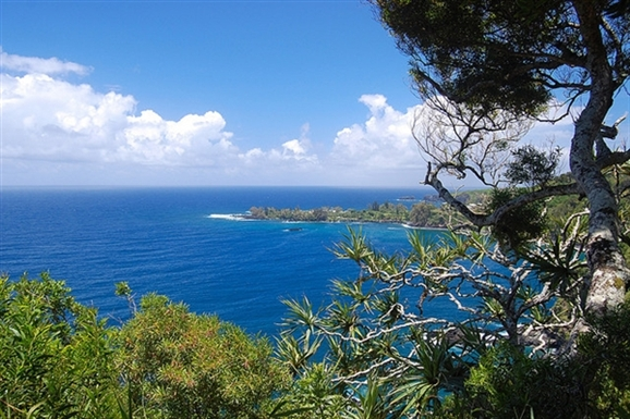 View from Trees of Coastline